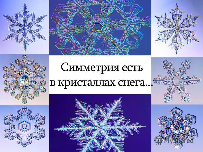 симметрия в природе картинки