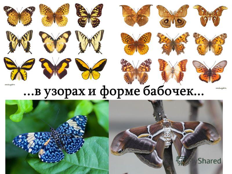 ...в узорах и форме бабочек...