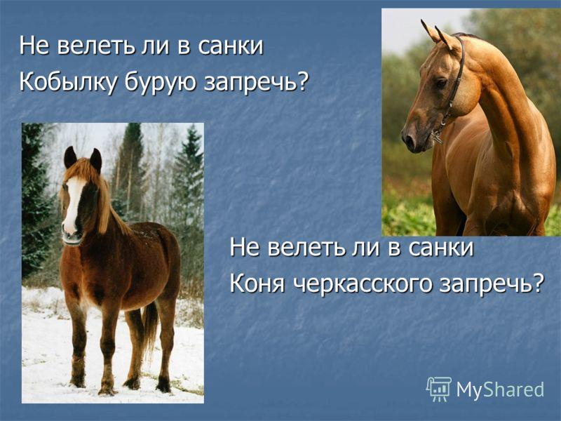 Не велеть ли в санки Кобылку бурую запречь? Не велеть ли в санки Коня черкасского запречь?