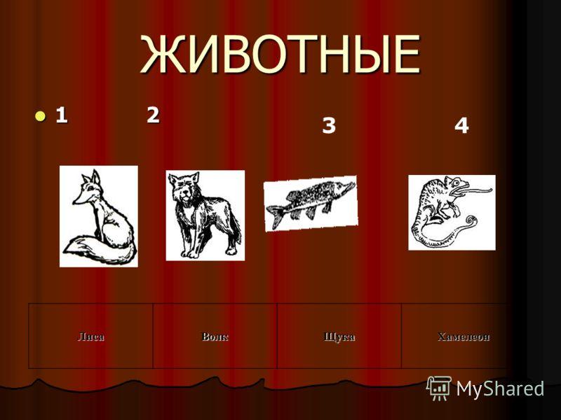 ЖИВОТНЫЕ 1 2 1 2ЛисаВолкЩукаХамелеон 3 4