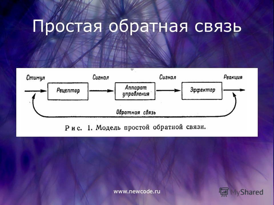 www.newcode.ru Простая обратная связь