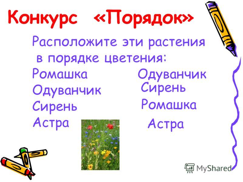 Конкурс «Порядок» Расположите эти растения в порядке цветения: Ромашка Одуванчик Сирень Астра Одуванчик Сирень Ромашка Астра
