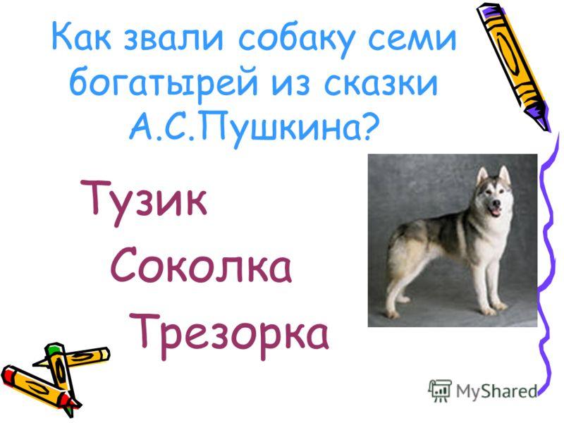 Как звали собаку семи богатырей из сказки А.С.Пушкина? Тузик Соколка Трезорка