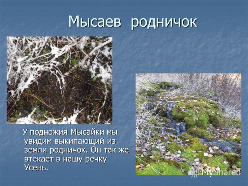 Мысаев родничок У подножия Мысайки мы увидим выкипающий из земли родничок. Он так же втекает в нашу речку Усень.