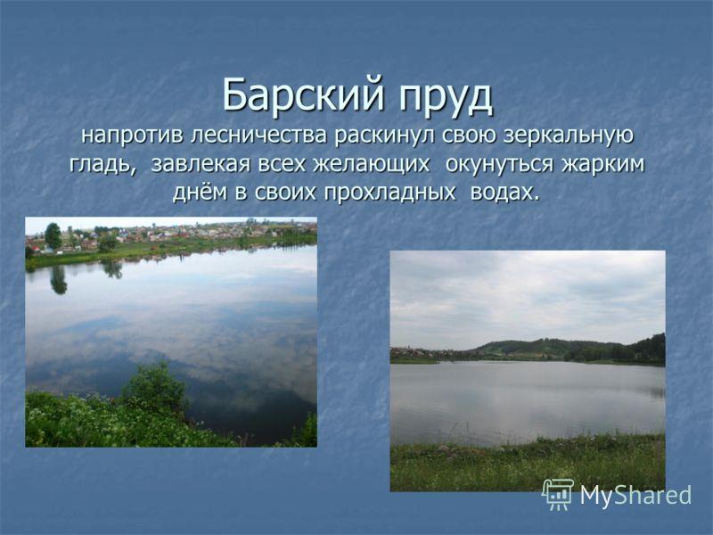 Барский пруд напротив лесничества раскинул свою зеркальную гладь, завлекая всех желающих окунуться жарким днём в своих прохладных водах.