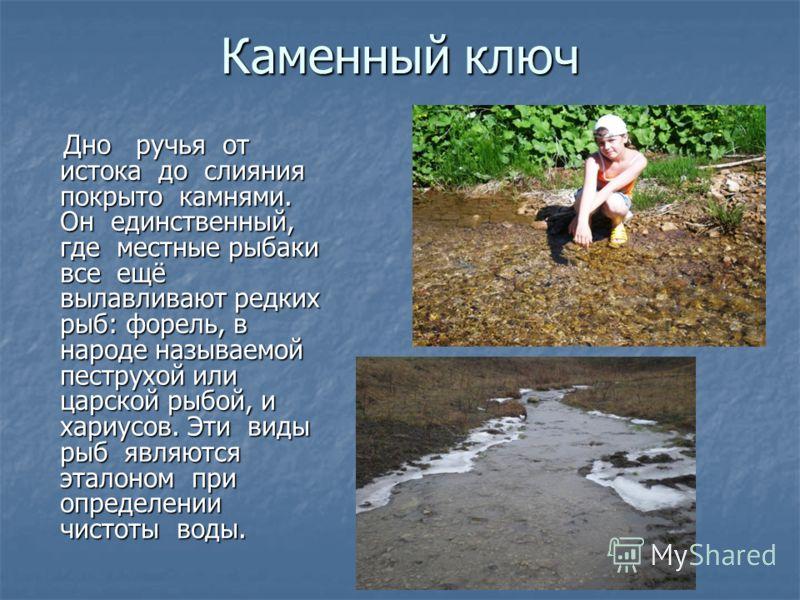 Каменный ключ Дно ручья от истока до слияния покрыто камнями. Он единственный, где местные рыбаки все ещё вылавливают редких рыб: форель, в народе называемой пеструхой или царской рыбой, и хариусов. Эти виды рыб являются эталоном при определении чист