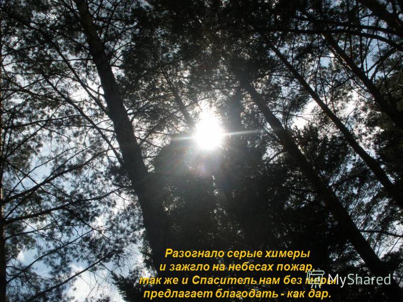 Разогнало серые химеры и зажгло на небесах пожар, так же и Спаситель нам без меры предлагает благодать - как дар.