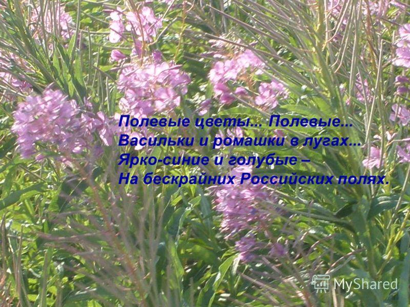 Полевые цветы... Полевые... Васильки и ромашки в лугах... Ярко-синие и голубые – На бескрайних Российских полях.