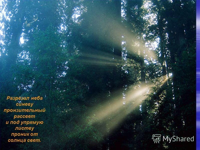 Разрезал неба синеву пронзительный рассвет и под упрямую листву проник от солнца свет.