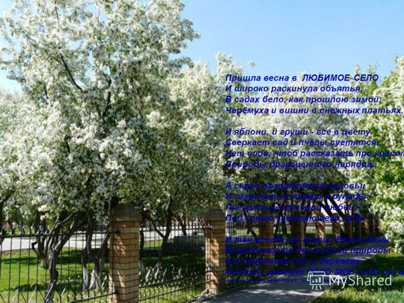 Пришла весна в ЛЮБИМОЕ СЕЛО И широко раскинула объятья, В садах бело, как прошлою зимой: Черёмуха и вишни в снежных платьях. И яблони, и груши - все в цвету. Сверкает сад и пчёлы суетятся… Нет слов, чтоб рассказать про красоту Природы драгоценного на