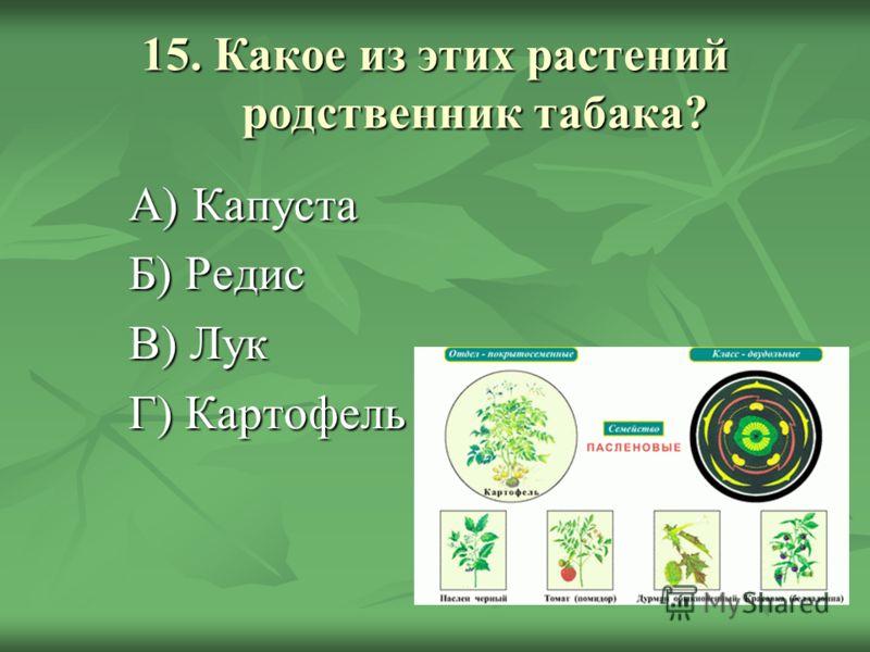 15. Какое из этих растений родственник табака? А) Капуста Б) Редис В) Лук Г) Картофель