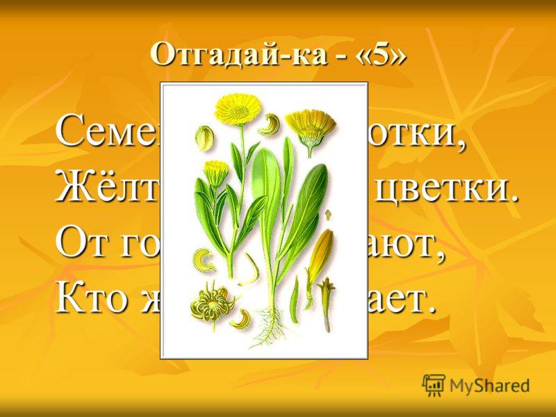 Отгадай-ка - «5» Семена, как коготки, Жёлто-красные цветки. От горла помогают, Кто же их не знает.