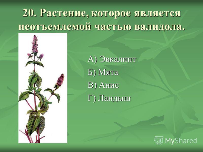 20. Растение, которое является неотъемлемой частью валидола. А) Эвкалипт Б) Мята В) Анис Г) Ландыш
