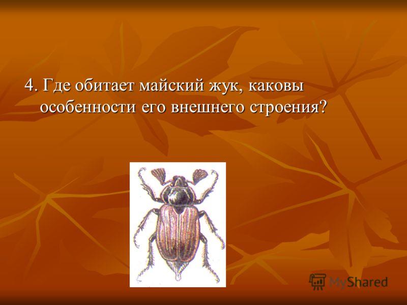4. Где обитает майский жук, каковы особенности его внешнего строения?