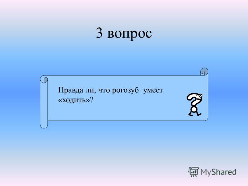 3 вопрос Правда ли, что рогозуб умеет «ходить»?