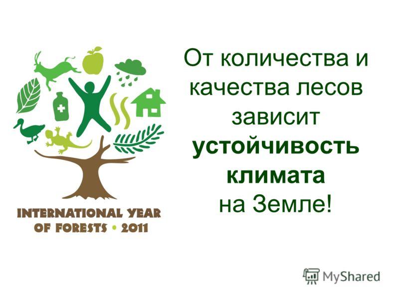 От количества и качества лесов зависит устойчивость климата на Земле!
