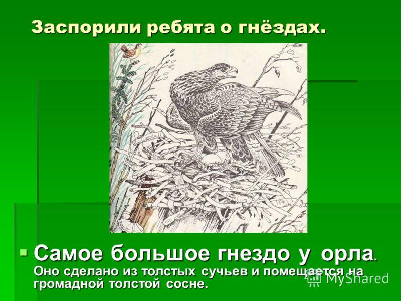Заспорили ребята о гнёздах. Самое большое гнездо у орла. Оно сделано из толстых сучьев и помещается на громадной толстой сосне. Самое большое гнездо у орла. Оно сделано из толстых сучьев и помещается на громадной толстой сосне.