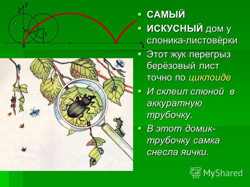 . САМЫЙ САМЫЙ ИСКУСНЫЙ дом у слоника-листовёрки ИСКУСНЫЙ дом у слоника-листовёрки Этот жук перегрыз берёзовый лист точно по циклоиде Этот жук перегрыз берёзовый лист точно по циклоиде И склеил слюной в аккуратную трубочку. И склеил слюной в аккуратну