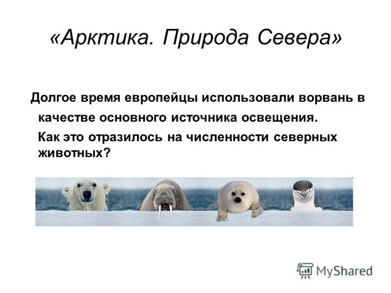 «Арктика. Природа Севера» Долгое время европейцы использовали ворвань в качестве основного источника освещения. Как это отразилось на численности северных животных?