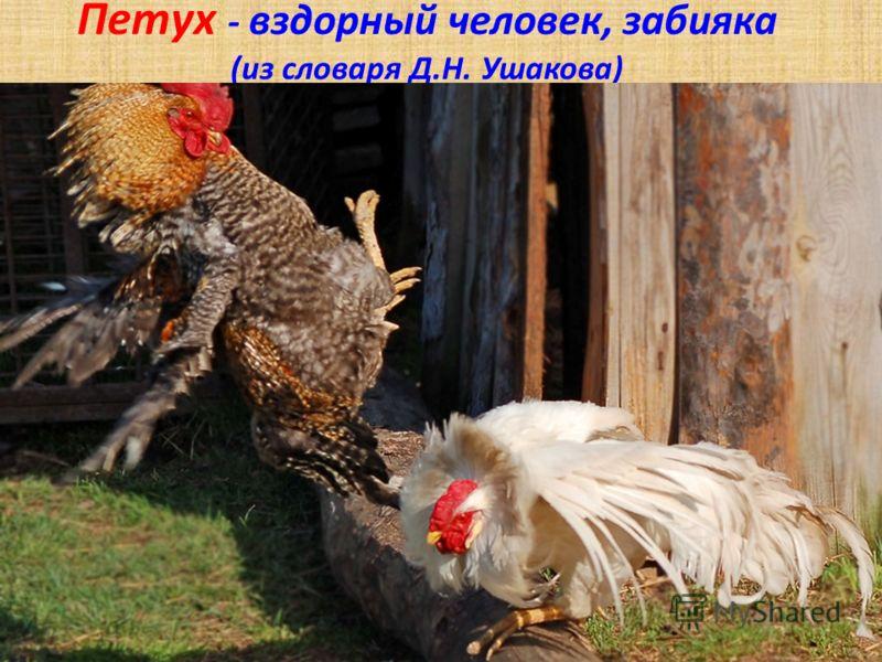 Петух - вздорный человек, забияка (из словаря Д.Н. Ушакова)