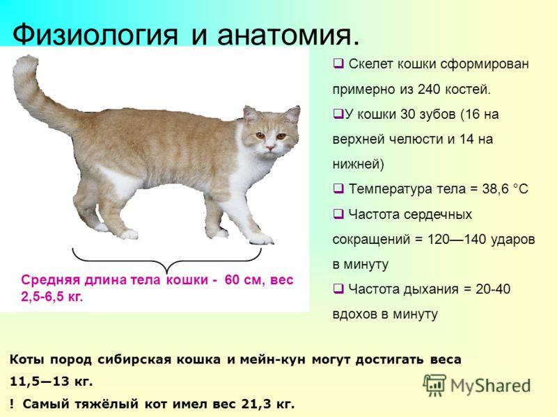 Физиология и анатомия. Средняя длина тела кошки - 60 см, вес 2,5-6,5 кг. Коты пород сибирская кошка и мейн-кун могут достигать веса 11,513 кг. ! Самый тяжёлый кот имел вес 21,3 кг. Скелет кошки сформирован примерно из 240 костей. У кошки 30 зубов (16