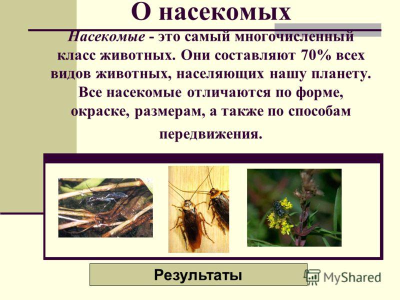 О насекомых Насекомые - это самый многочисленный класс животных. Они составляют 70% всех видов животных, населяющих нашу планету. Все насекомые отличаются по форме, окраске, размерам, а также по способам передвижения. Результаты