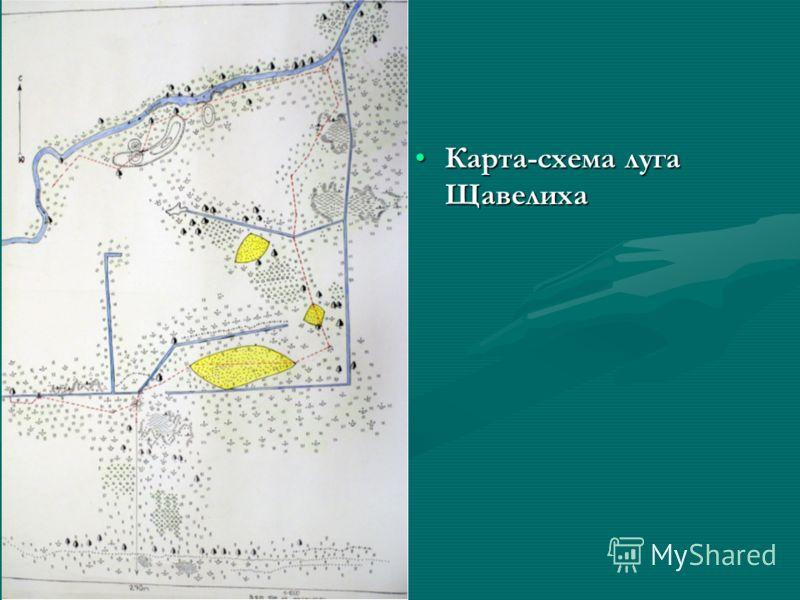 Карта-схема луга Щавелиха