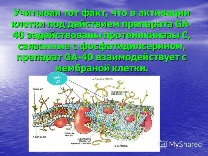 Учитывая тот факт, что в активации клетки под действием препарата GA- 40 задействованы протеинкиназы С, связанные с фосфатидилсерином, препарат GA-40 взаимодействует с мембраной клетки. GA- 40