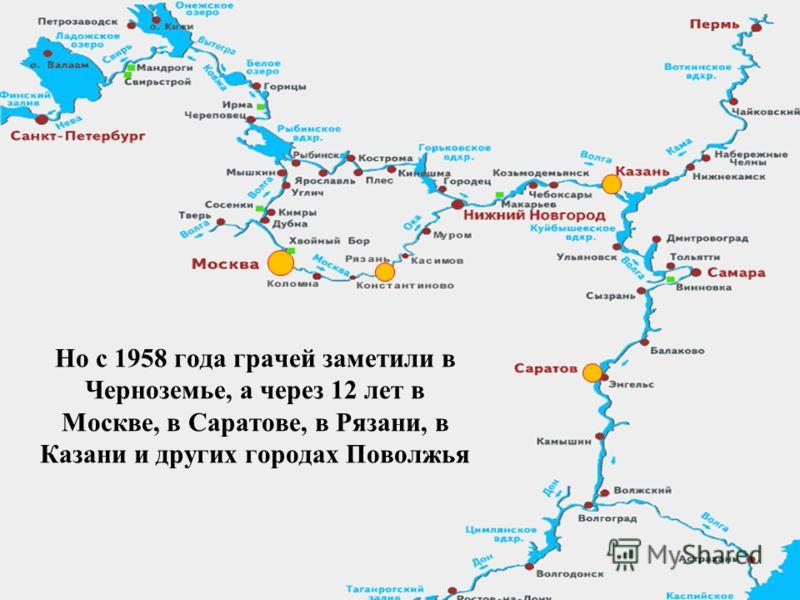 Но с 1958 года грачей заметили в Черноземье, а через 12 лет в Москве, в Саратове, в Рязани, в Казани и других городах Поволжья