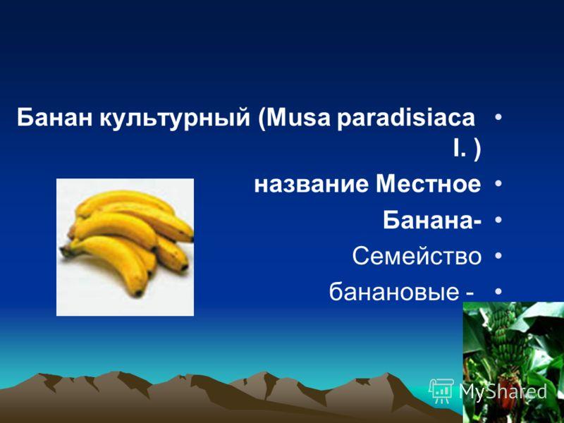 Банан культурный (Musa paradisiaca I. ) Местное название -Банана Семейство - банановые