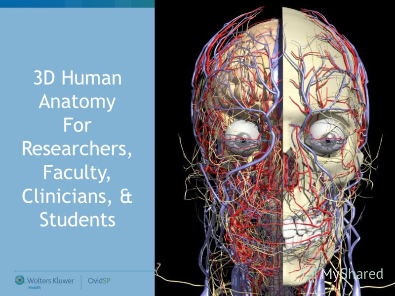 3D Human Anatomy For Researchers, Faculty, Clinicians, & Students