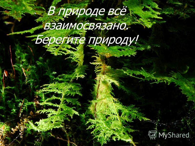 В природе всё взаимосвязано. Берегите природу!