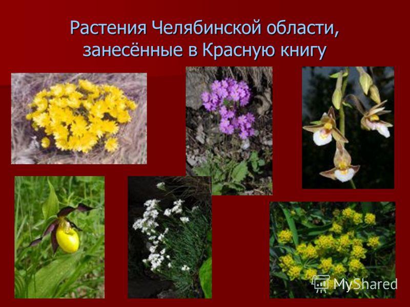 Растения Челябинской области, занесённые в Красную книгу