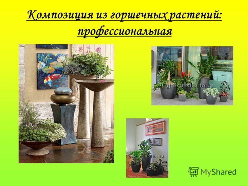Композиция из горшечных растений: профессиональная