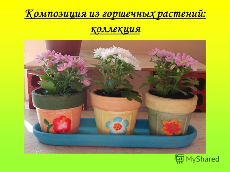 Композиция из горшечных растений: коллекция