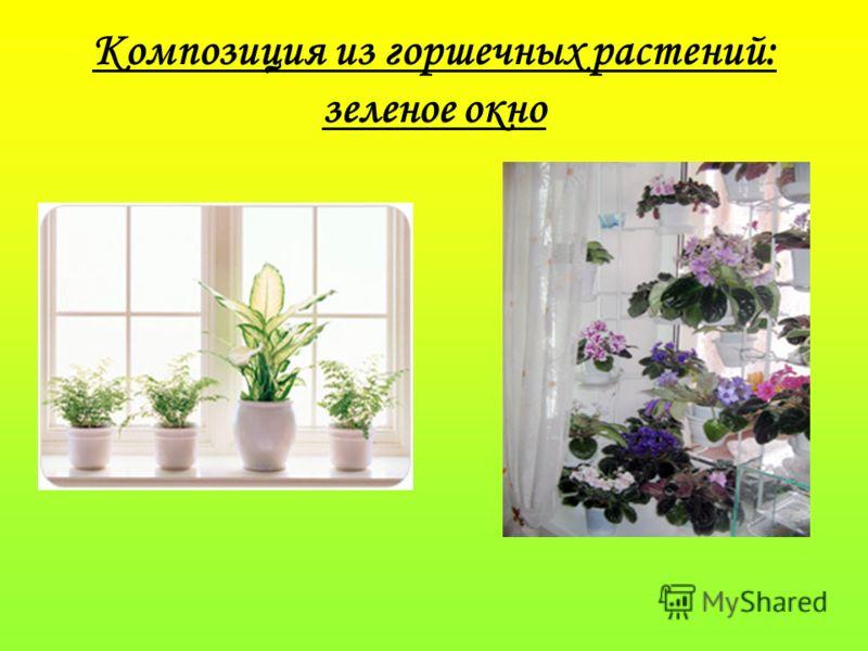 Композиция из горшечных растений: зеленое окно