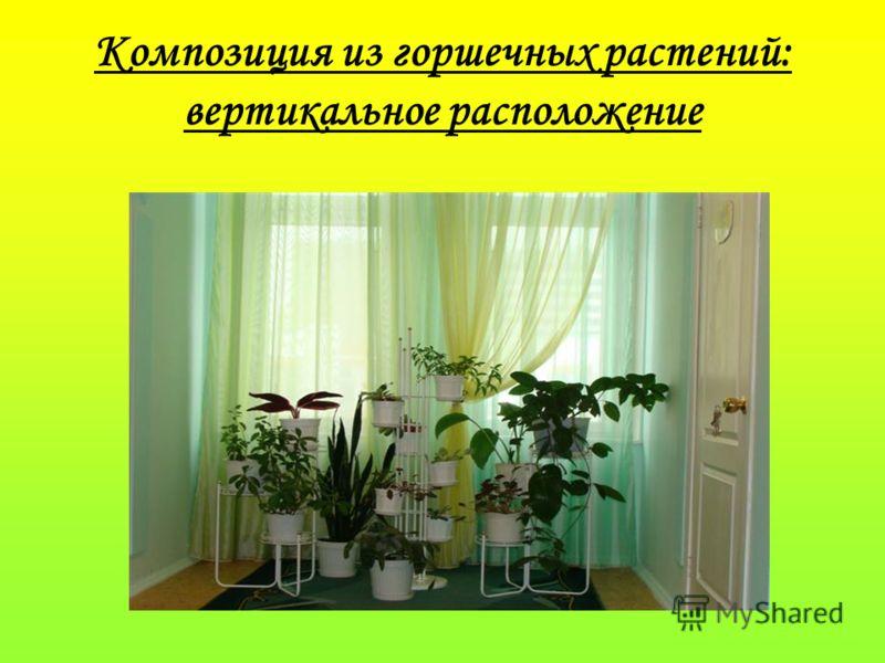 Композиция из горшечных растений: вертикальное расположение