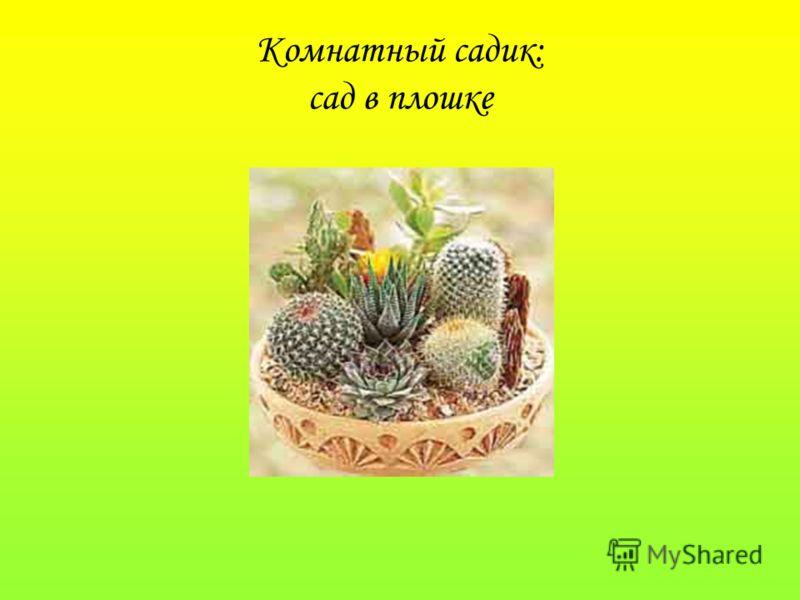 Комнатный садик: сад в плошке