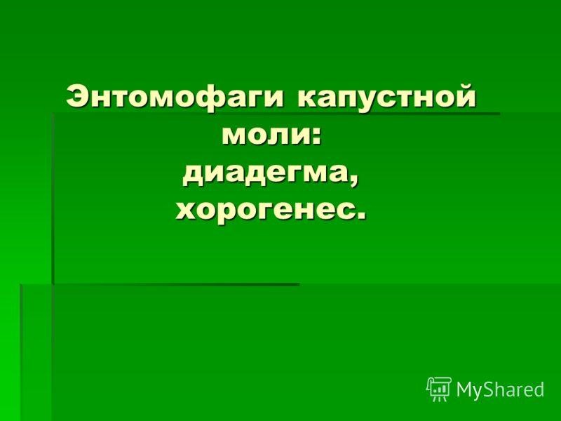 Энтомофаги капустной моли: диадегма, хорогенес.