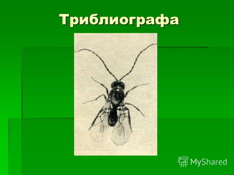Триблиографа