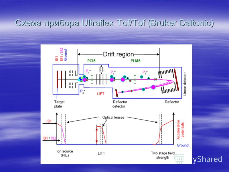 Схема прибора Ultraflex Tof/Tof (Bruker Daltonic)