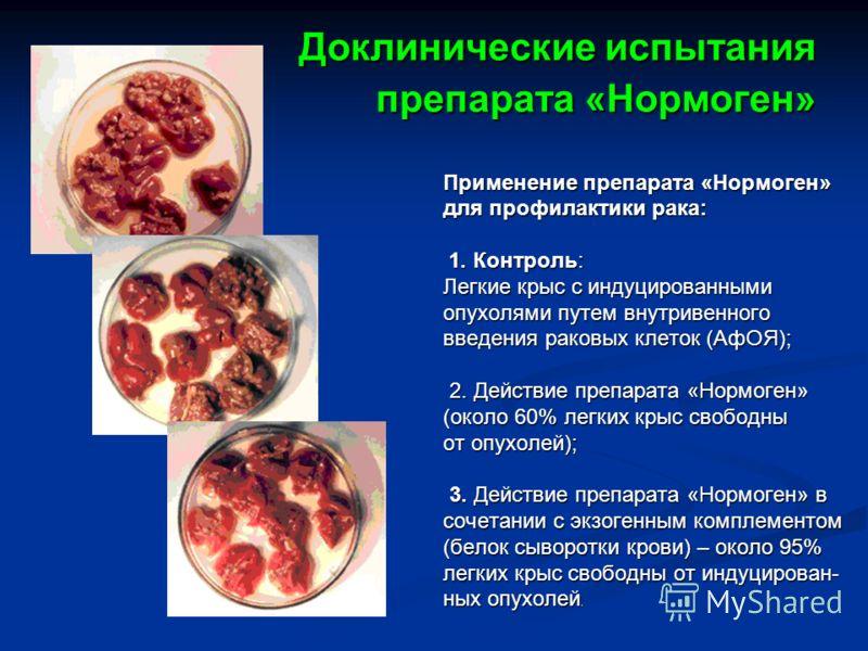 Доклинические испытания препарата «Нормоген» Применение препарата «Нормоген» для профилактики рака: 1. Контроль: Легкие крыс с индуцированными опухолями путем внутривенного введения раковых клеток (АфОЯ); 2. Действие препарата «Нормоген» (около 60% л