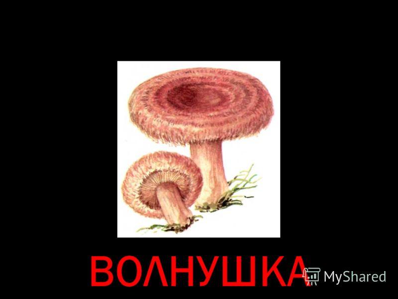 ВОЛНУШКА