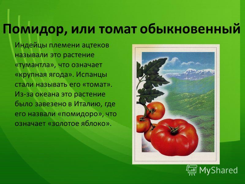 Помидор, или томат обыкновенный Индейцы племени ацтеков называли это растение «тумантла», что означает «крупная ягода». Испанцы стали называть его «томат». Из-за океана это растение было завезено в Италию, где его назвали «помидоро», что означает «зо