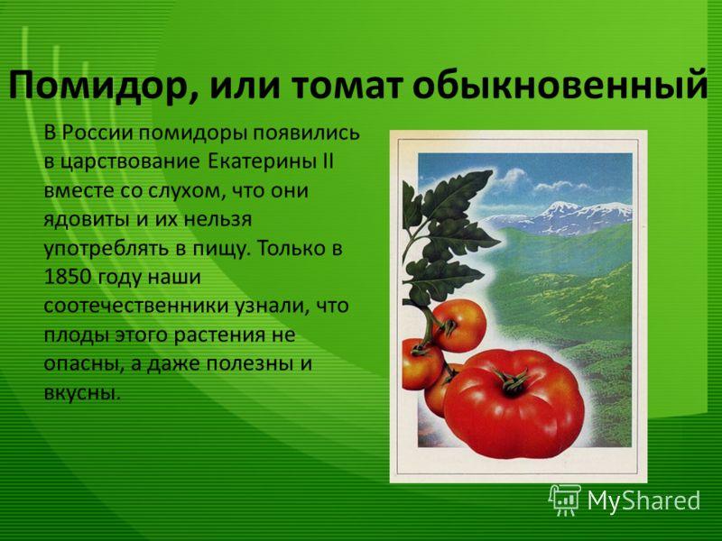 Помидор, или томат обыкновенный В России помидоры появились в царствование Екатерины II вместе со слухом, что они ядовиты и их нельзя употреблять в пищу. Только в 1850 году наши соотечественники узнали, что плоды этого растения не опасны, а даже поле