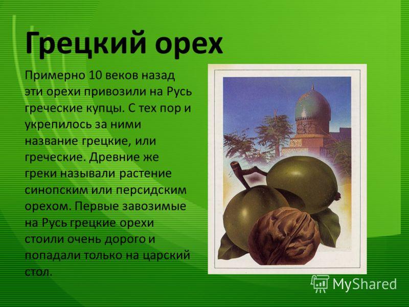 Грецкий орех Примерно 10 веков назад эти орехи привозили на Русь греческие купцы. С тех пор и укрепилось за ними название грецкие, или греческие. Древние же греки называли растение синопским или персидским орехом. Первые завозимые на Русь грецкие оре