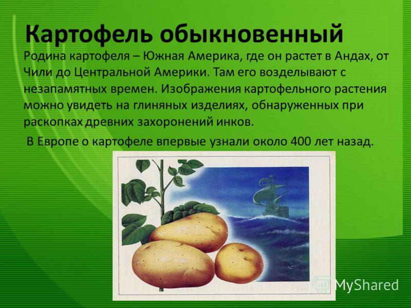 Картофель обыкновенный Родина картофеля – Южная Америка, где он растет в Андах, от Чили до Центральной Америки. Там его возделывают с незапамятных времен. Изображения картофельного растения можно увидеть на глиняных изделиях, обнаруженных при раскопк