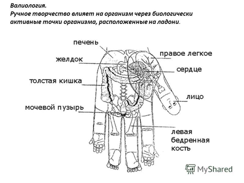 Валиология. Ручное творчество влияет на организм через биологически активные точки организма, расположенные на ладони.