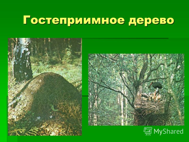 Гостеприимное дерево Гостеприимное дерево