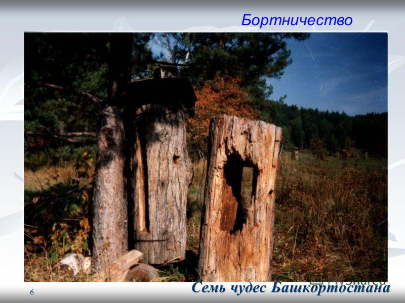 6 Бортничество Семь чудес Башкортостана Семь чудес Башкортостана